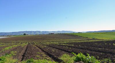 Barry farm image