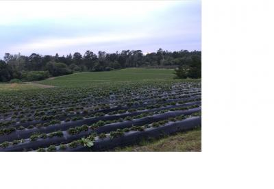 Pescadero Farm Land for Lease