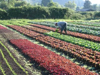 Horton Road Organics